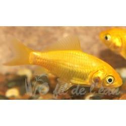 Poisson jaune 7/10 cm